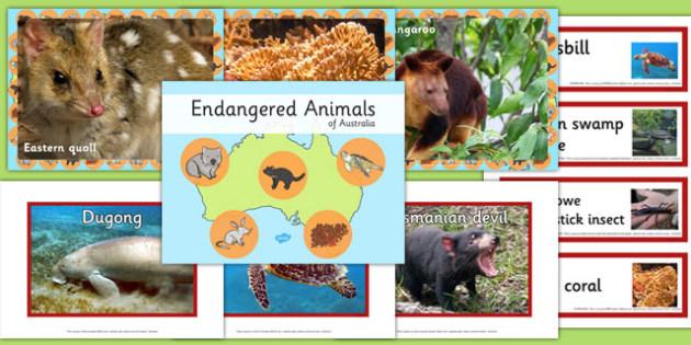 Endangered Australian Animals pack - australia, animals, endangered