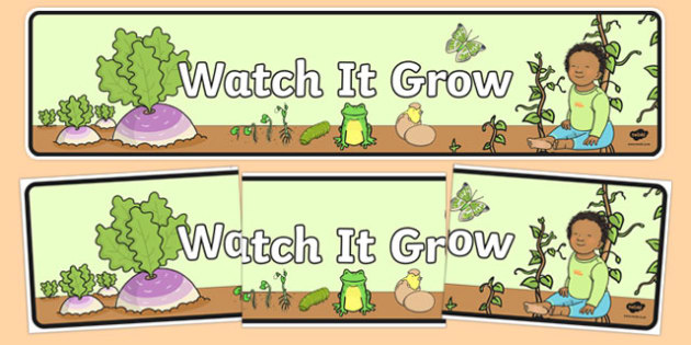 Watch It Grow Display Banner - australia, Australian Curriculum, Watch it Grow, science, year 2, banner, wall display