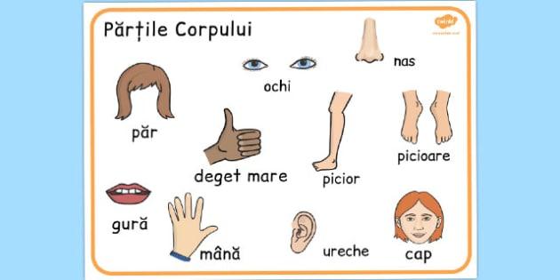 Partile Corpului, Plansa cu denumiri si imagini, corpul uman, Romanian