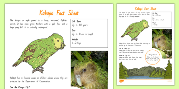 New Zealand Native Birds Kakapo Fact Sheet - nz, new zealand, Native, birds, animals