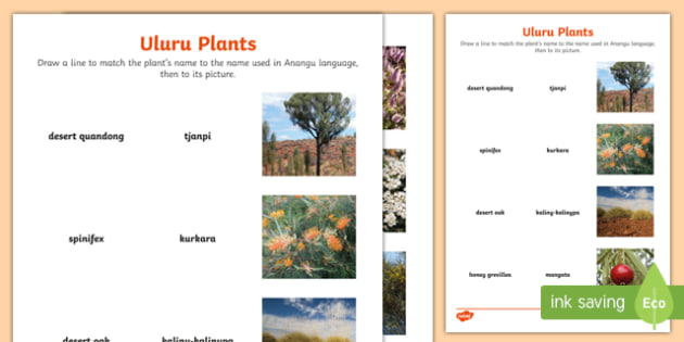 Uluru Plants Word and Picture Matching Activity Sheet