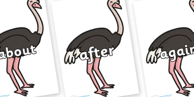 KS1 Keywords on Ostriches - KS1, CLL, Communication language and literacy, Display, Key words, high frequency words, foundation stage literacy, DfES Letters and Sounds, Letters and Sounds, spelling