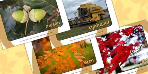 Autumn Display Photos Welsh Translation - seasons, weather, wales