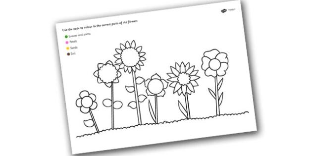 Colour Code Colouring Flowers Sheet - colour, flowers, wet play