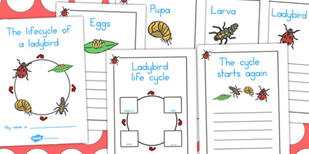 Ladybird Life Cycle Workbook - life cycles, lifecycle, worksheets