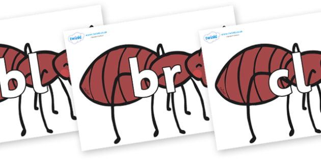 Initial Letter Blends on Ants - Initial Letters, initial letter, letter blend, letter blends, consonant, consonants, digraph, trigraph, literacy, alphabet, letters, foundation stage literacy