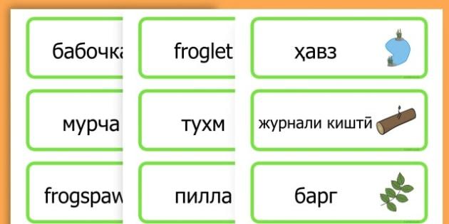 Life Cycle Word Cards - life cycles, lifecycle, visual aid, words - Tajik