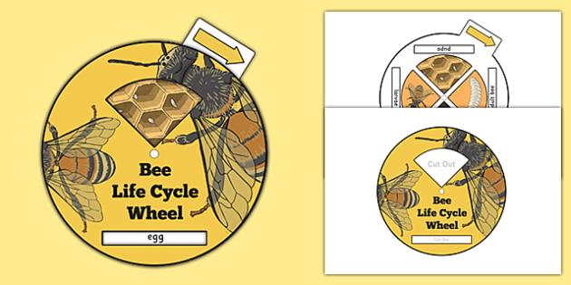Bee Life Cycle Spin Wheel - life cycles, visual aid, minibeasts