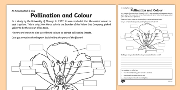 Pollination and Colour Activity Sheet - amazing fact a day, activity sheet, activity, activities,, worksheet