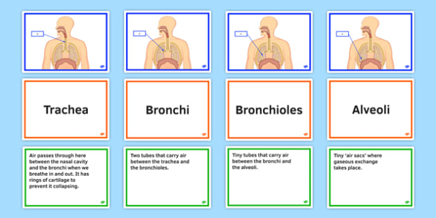 KS3 Science Parts of Respiratory System FaF Activity - ks3, science, parts, respiratory system, faf, activity