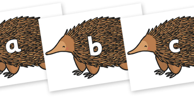 Phase 2 Phonemes on Echidna - Phonemes, phoneme, Phase 2, Phase two, Foundation, Literacy, Letters and Sounds, DfES, display