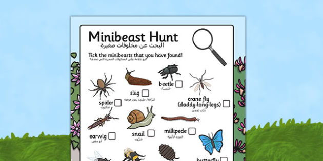 Minibeast Hunt Sheet Arabic Translation - arabic, Minibeast hunt, minibeast investigation, finding minibeasts, Minibeasts, Topic, Foundation stage, knowledge and understanding of the world, investigation, living things, snail, bee, ladybird, butterfl