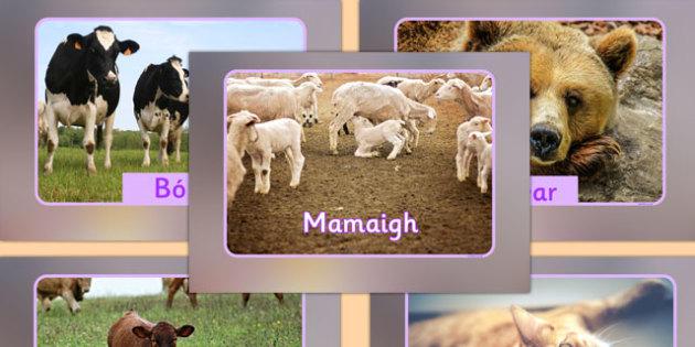 Mammals Display Photos Gaeilge - roi, irish, gaeilge, vocabulary, display photos, mammals