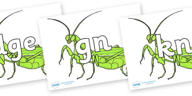 Silent Letters on Praying Mantis - Silent Letters, silent letter, letter blend, consonant, consonants, digraph, trigraph, A-Z letters, literacy, alphabet, letters, alternative sounds