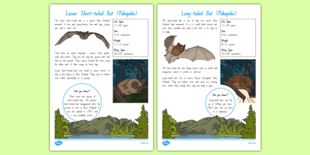 New Zealand Native Bats Fact File - nz, New Zealand, animals, native, factfile, bats, mammals