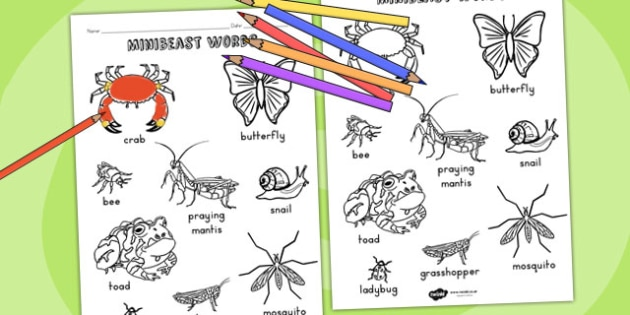 Minibeasts Words Colouring Sheet - colours, fine motor skills