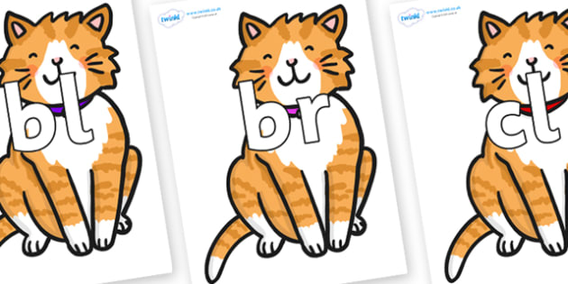 Initial Letter Blends on Cat - Initial Letters, initial letter, letter blend, letter blends, consonant, consonants, digraph, trigraph, literacy, alphabet, letters, foundation stage literacy