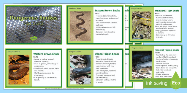10 of Australia's Dangerous Snakes  Fact Cards - Australian Animals, reptiles, activity sheets, research, reading, writing, birds, fish, mammals, Aus