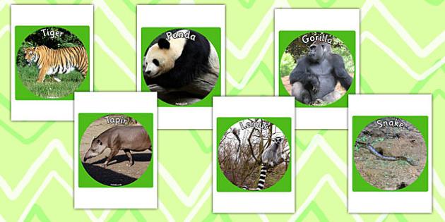Jungle and Rainforest Display Photo Cut Outs - jungle, rainforest
