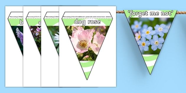 Flowers Photo Display Bunting - flowers, flowers bunting, flowers photo bunting, flower shop, garden centre, flower display bunting, plants, living things