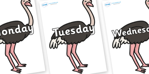 Days of the Week on Ostriches - Days of the Week, Weeks poster, week, display, poster, frieze, Days, Day, Monday, Tuesday, Wednesday, Thursday, Friday, Saturday, Sunday