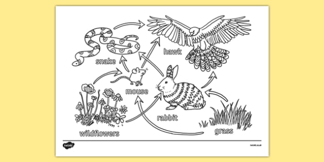 KS3 Science Revision Colouring Food Web - ks3, science, revision, colouring, food web