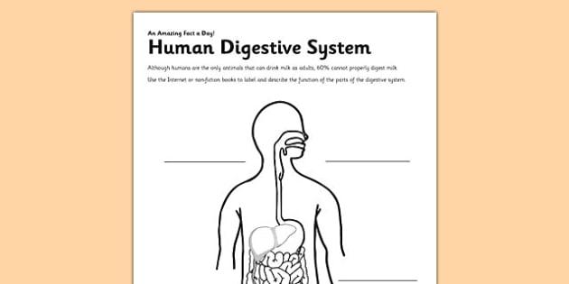 Human Digestive System Activity Sheet - digestion, digestive system, human, label, worksheet