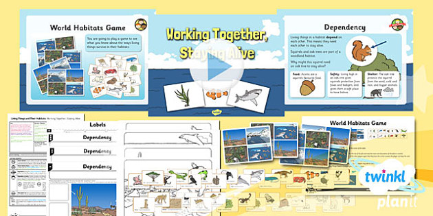 PlanIt - Science Year 2 - Living Things and Their Habitats Lesson 5: Working Together Staying Alive - science, ks1, key stage 1, planning, resources, topic, nature, animals, places, homes, display, activities, ecology, environment,