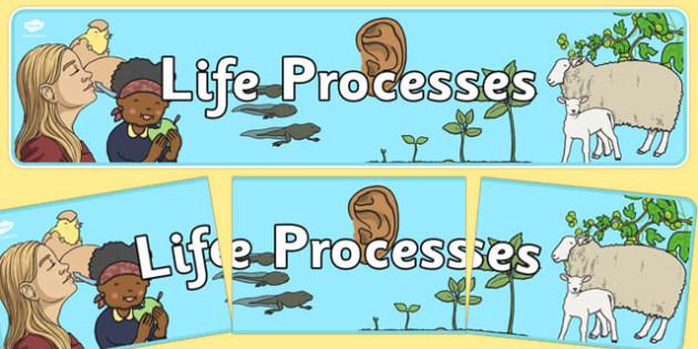 Life Processes Display Banner NZ - nz, new zealand, life processes, display banner, display, banner