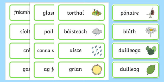 Growth Topic Word Cards Gaeilge - Plant, Growth, Word Card, Topic, Foundation stage, knowledge and understanding of the world, investigation, living things