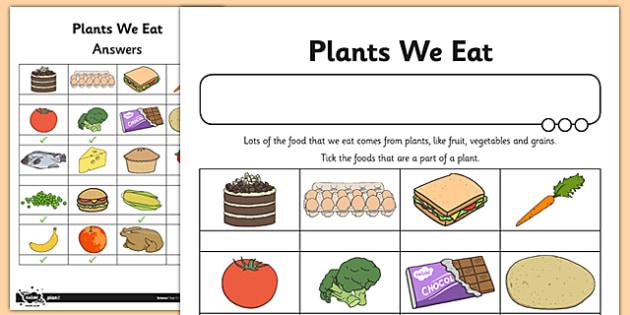 Activity Sheet Plants We Eat - activity, sheet, plants, we eat, worksheet