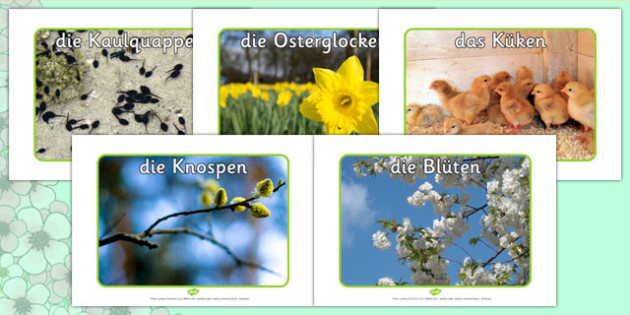 Spring Display Photos German - german, Spring, seasons, photo, display photo, lambs, daffodils, new life, flowers, buds, plants, growth