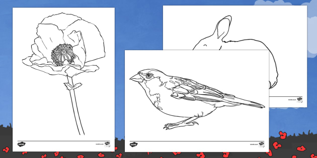 Poppy Story Colouring Pages