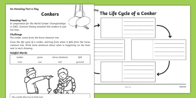 Conkers! Activity Sheet, worksheet