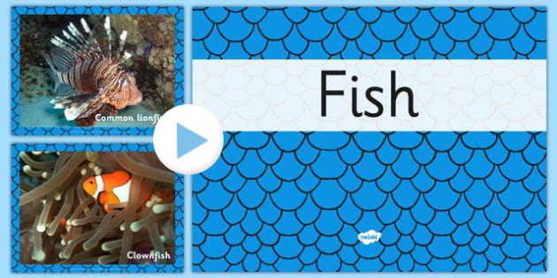 Australian Fish PowerPoint - australia, fish, powerpoint, animals