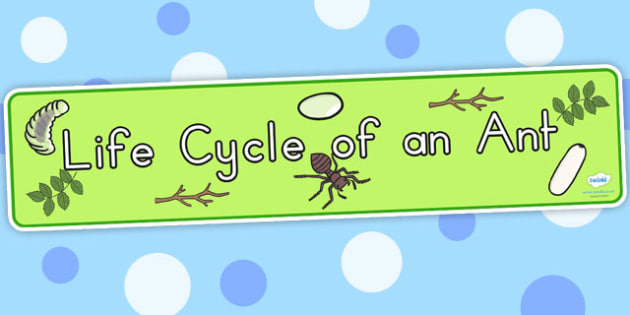 Ant Life Cycle Display Banner - life cycles, lifecycle, header