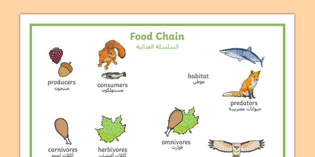 Food Chain Word Mat With Images Arabic Translation - arabic, food, chain, food chain, foods, word mat, mat writing aid, with images, images, producer, consumer, predator, cycle, different foods, animals, animal, eating, growing, consuming, producing,