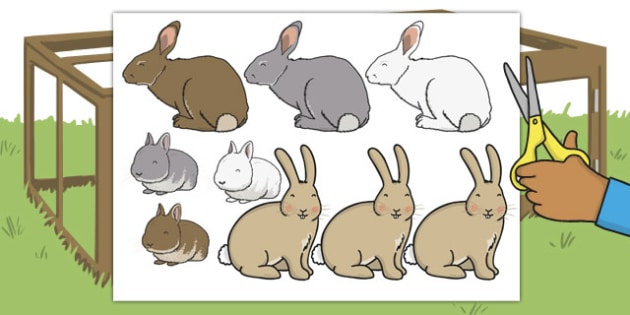 Fluffy Bunny Cut Outs - fluffy, bunny, cut outs, cut, outs, rabbit