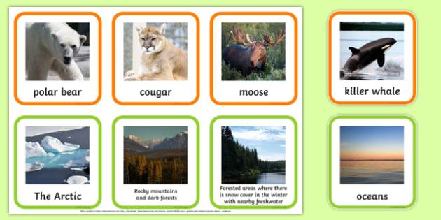 Animal Habitats Matching Cards