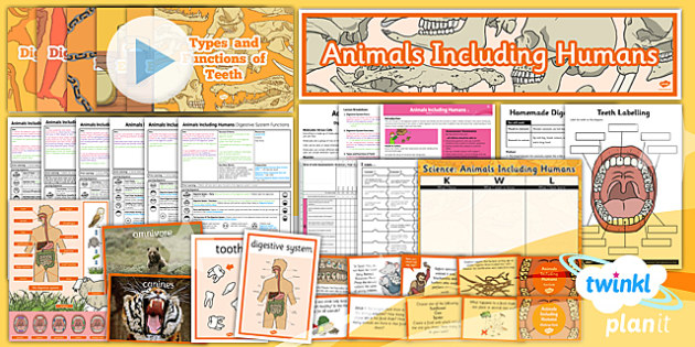 PlanIt - Science Year 4 - Animals Including Humans Unit Pack