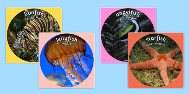Under the Sea Themed Display Photo Cut Outs Romanian Translation - bilingual, topic, fish