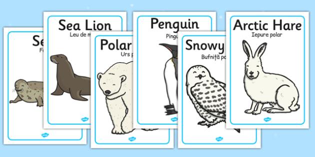 Polar Regions Animals Display Posters Romanian Translation - romanian, arctic, animals, display posters, display, posters