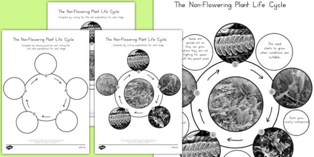 Non-Flowering Life Cycle - australia, non-flowering, life cycle, life, cycle, science