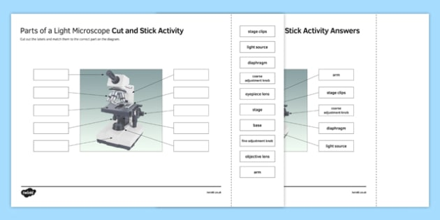 Parts of a Light Microscope Cut and Stick Activity Sheet, worksheet