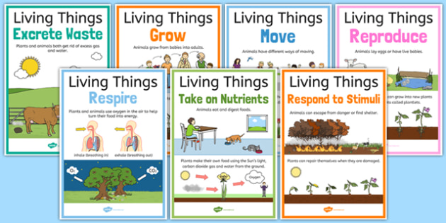Characteristics of Living Things A4 Poster Set - Science, Year 3, Living, Non-Living, Characteristics, Poster, Australian Curriculum