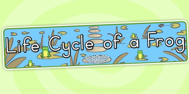 Life Cycle of a Frog Display Banner - header, display, lifecycles