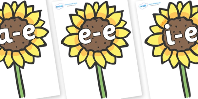 Modifying E Letters on Sunflowers - Modifying E, letters, modify, Phase 5, Phase five, alternative spellings for phonemes, DfES letters and Sounds