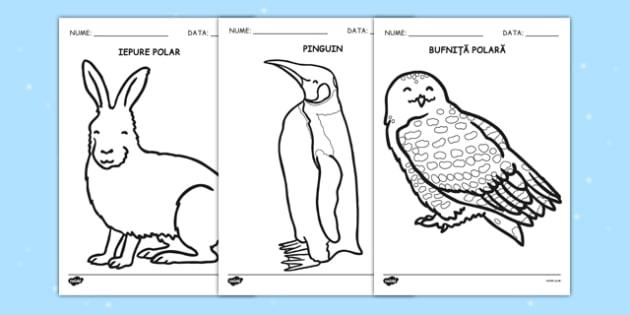 Animalele la poli - Fișe pentru colorat