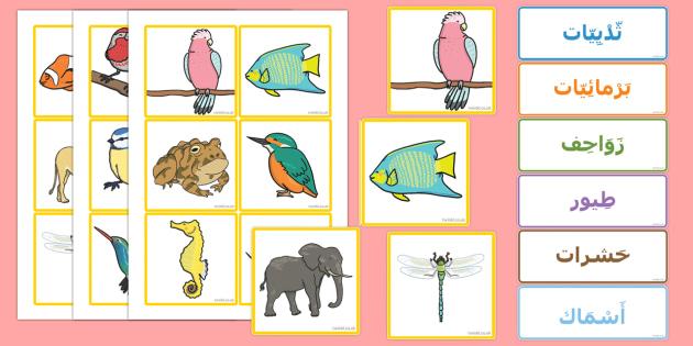 بطاقات فرز مجموعة الحيوانات