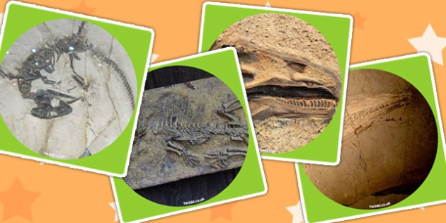 Dinosaur Fossils Display Photo Cut Outs - dinosaurs, photos